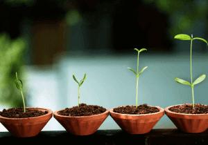 Pitch Your Start-up, deuxième édition