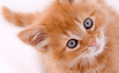 Start-up, le culte des chatons