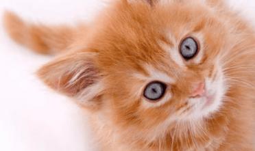 Start-up : «C'est le culte des oursons et des chatons : c'est mignon à cet âge-là, dommage que ça grandisse !»