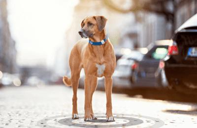 Chiens et chats connectés aux GPS Tractive